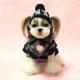 Ensemble pull et bonnet pour chien Petit Poucet