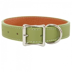 Collier pour gros chien vert
