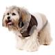 Doudoune pour chien trio de couleur