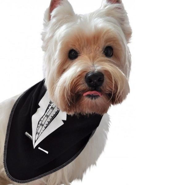 bandana pour chien noir avec une cravate accessoire chien oh pacha. Black Bedroom Furniture Sets. Home Design Ideas