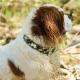 Collier camouflage pour chien
