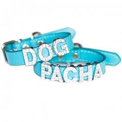 Collier pour chien à personnaliser turquoise