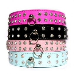 Collier pour chien Hollywood