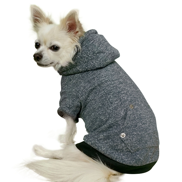 pull pour chihuahua