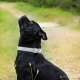 Collier pour gros chien White Star