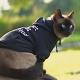 Sweat pour chat Petit mais costaud