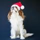 Bonnet de Père Noël pour chien