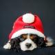 Déguisement pour chien Papa Noël