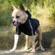 Manteau pour gros chien réversible noir