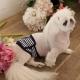 Bandeau pour chien anti-pipi matelot