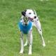 Harnais pour chien turquoise Puppia