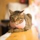 Harnais pour chat Cabourg