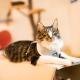Harnais pour chat Deauville