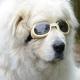 Lunettes beige pour chien