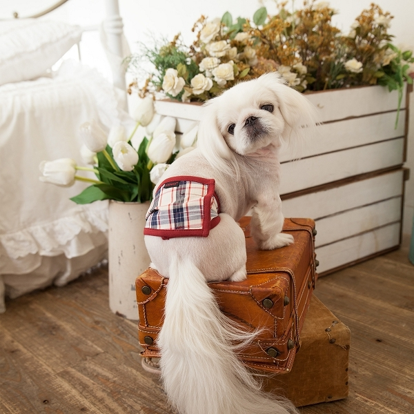 bandeau pour chien anti pipi rouge bleu et beige puppia. Black Bedroom Furniture Sets. Home Design Ideas