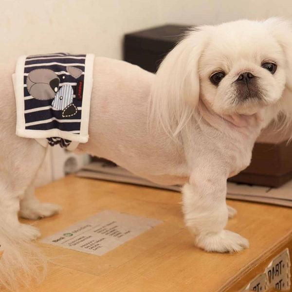 bandeau pour chien anti pipi bleu et blanc puppia oh pacha. Black Bedroom Furniture Sets. Home Design Ideas