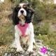 Harnais pour chien rose Puppia
