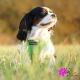 Harnais pour chien vert Puppia