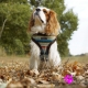 Harnais pour chien Daphné Puppia