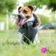Doudoune pour chien Avoriaz