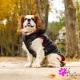 Doudoune pour chien réversible noire