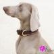 Collier pour chien Trinidad