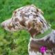 Collier pour chien vert avec strass