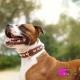Collier pour chien bling bling marron