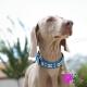 Collier pour chien en cuir bleu tête de mort