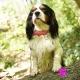 Collier pour chien rose à pois