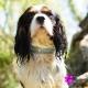 Collier en cuir pour chien tête de mort diams