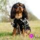 Ciré pour chien noir