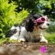 Lunettes roses pour chien
