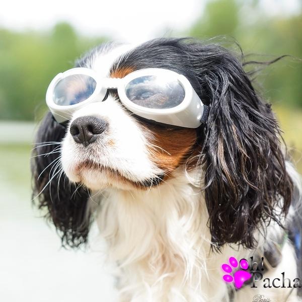 Lunettes pour chien argent Doggles