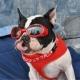 Lunettes pour chien rouge