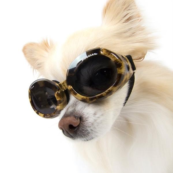 frais frais nouveau style de 2019 divers design Lunettes motif léopard pour chien Doggles
