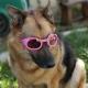 Lunettes rose pour chien