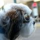 Lunettes pour chien gris acier