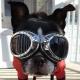 Lunettes pour chien Side-car