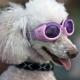 Lunettes pour chien lilas