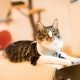 Harnais pour chat Amalfi