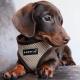 Harnais pour chien beige Puppia
