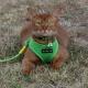 Harnais pour chat vert Puppia