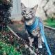 Harnais pour chat turquoise Puppia