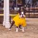 Coupe-vent pour chien jaune