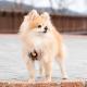 Harnais pour chien Kensington Puppia