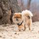 Harnais pour chien Kensington Puppia Noir