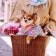 Manteau pour chien Soho