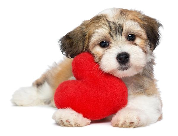 Cadeaux de Saint-Valentin pour chien