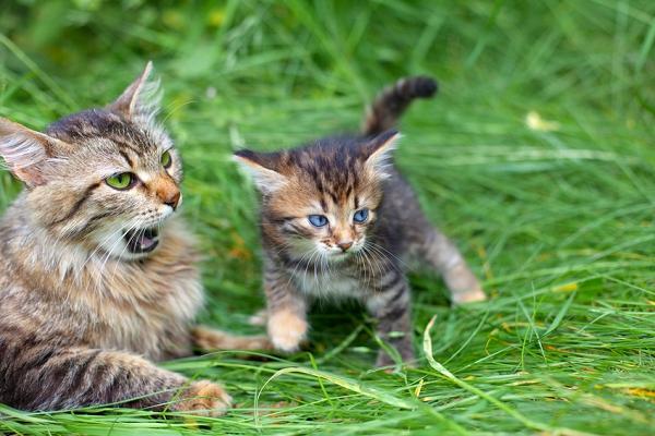 La cohabitation chez les chats